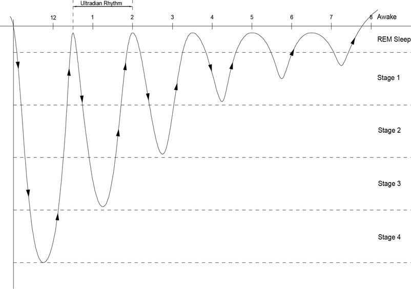 Figure 4. Circadian Rhythm in constant 'Dark' and 'Silent' conditions (free running).